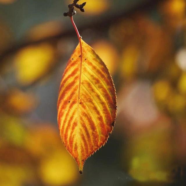 秋天虽然总给人一种悲凉、凄惨的感觉.但中在我的眼中是一副美丽的